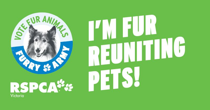 Did you know vets can't reunite lost pets with their owner? Help change this at