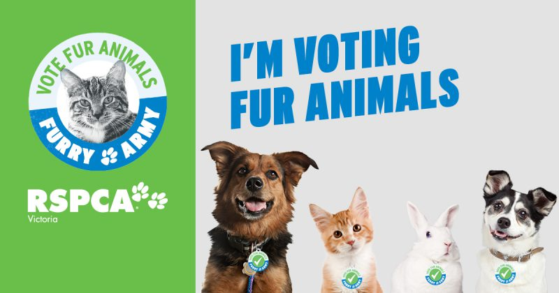This is why I joined @RSPCAVIC #FurryArmy: